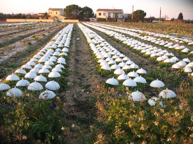 vue sur les champs de ...salades....