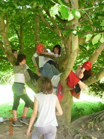 Des journées entières dans les arbres !