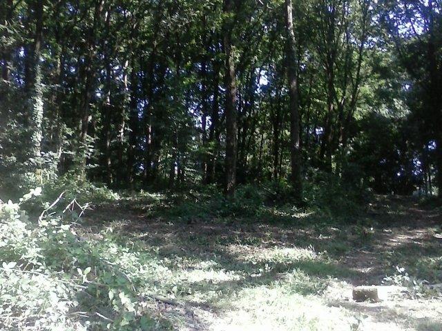 Le bois des éclés (2)