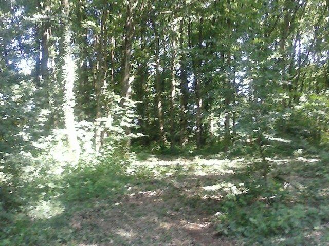 Le bois des éclés (1)