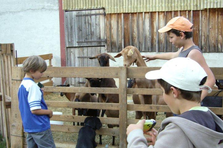 A la découverte d'une chèvrerie