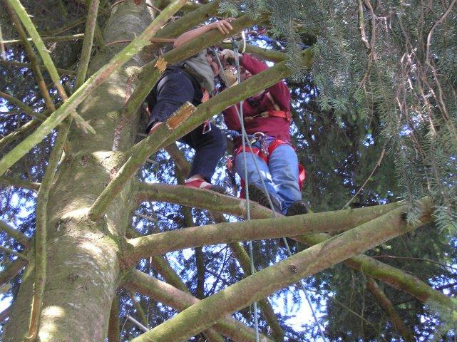 écureuil dans les arbres
