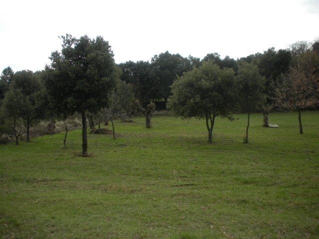 Terrin Camp Loups 1